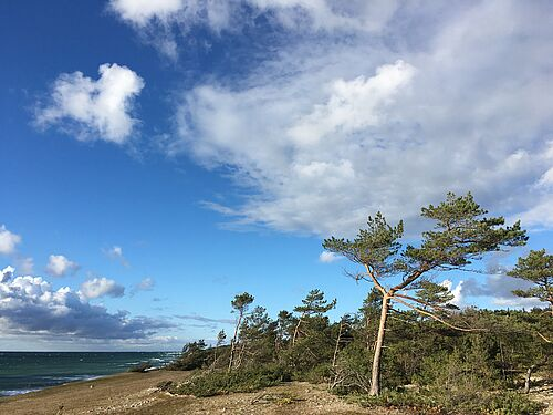 Forest Growth in the Southern Baltic Slows Down Due to Climate Change